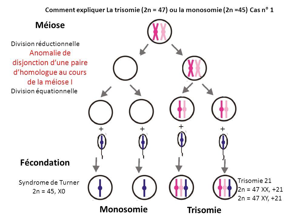 Méiose Division réductionnelle Anomalie de disjonction dune paire dhomologue au cours de la méiose I Division équationnelle Fécondation Monosomie Tris