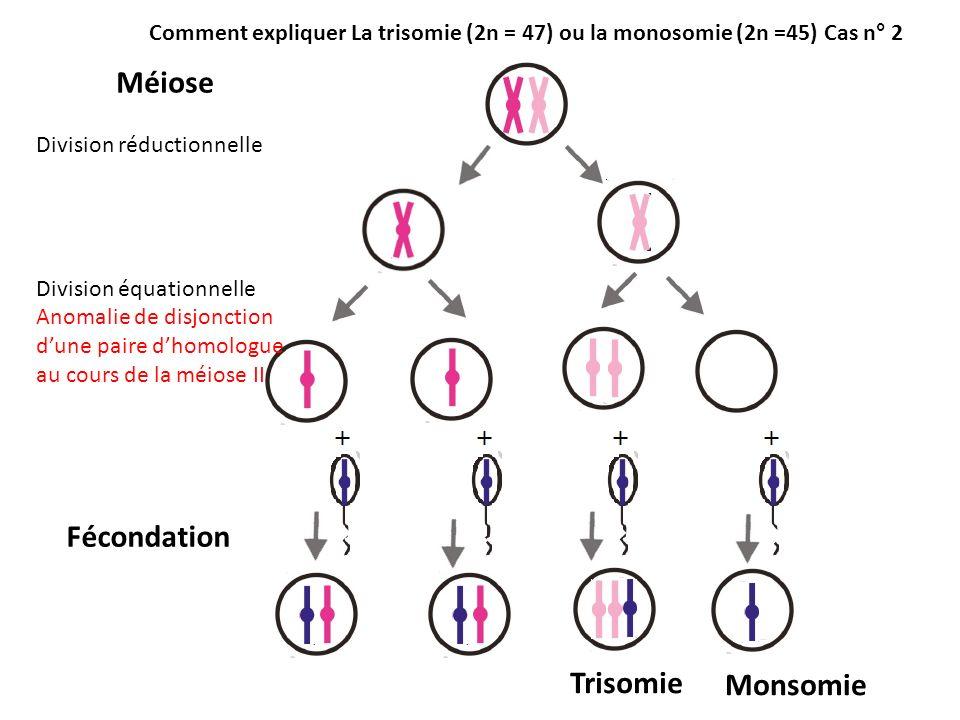 Méiose Division réductionnelle Division équationnelle Anomalie de disjonction dune paire dhomologue au cours de la méiose II Fécondation Comment expli