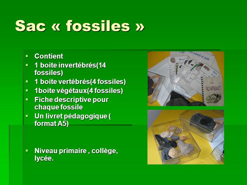 Sac « fossiles » Contient Contient 1 boite invertébrés(14 fossiles) 1 boite invertébrés(14 fossiles) 1 boite vertébrés(4 fossiles) 1 boite vertébrés(4