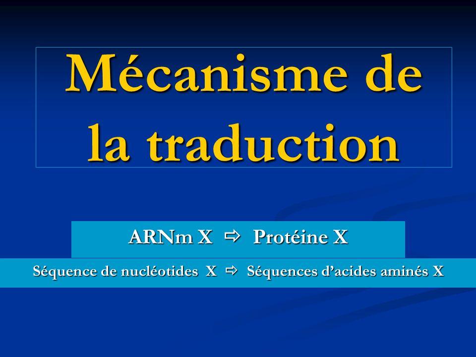 Mécanisme de la traduction ARNm X Protéine X Séquence de nucléotides X Séquences dacides aminés X