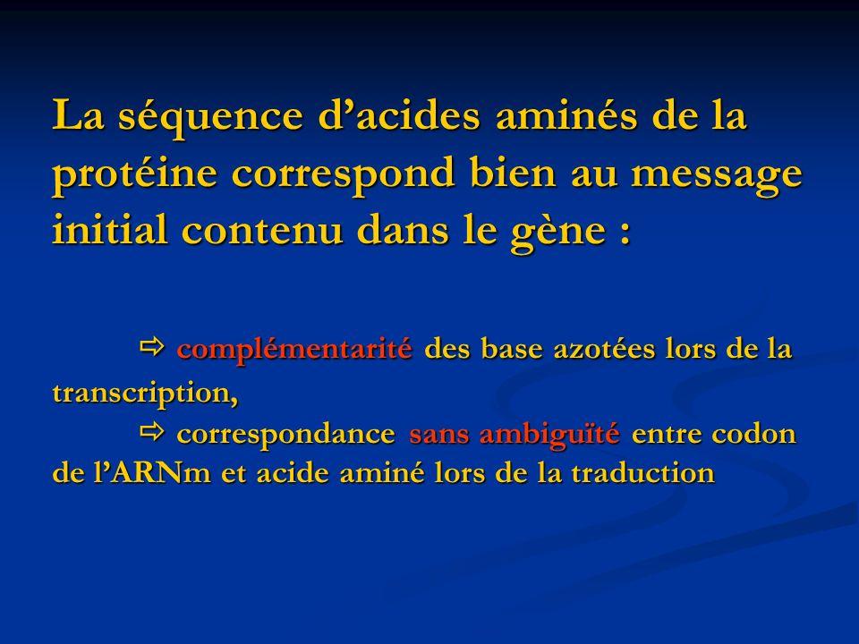 La séquence dacides aminés de la protéine correspond bien au message initial contenu dans le gène : complémentarité des base azotées lors de la transc