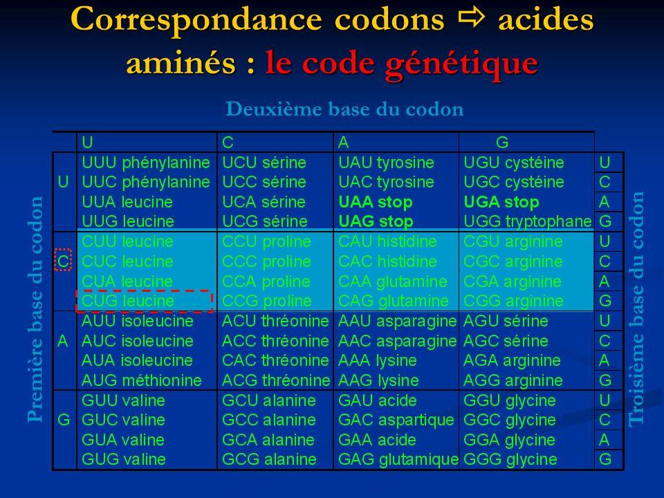 Correspondance codons acides aminés : le code génétique Première base du codon Deuxième base du codon Troisième base du codon
