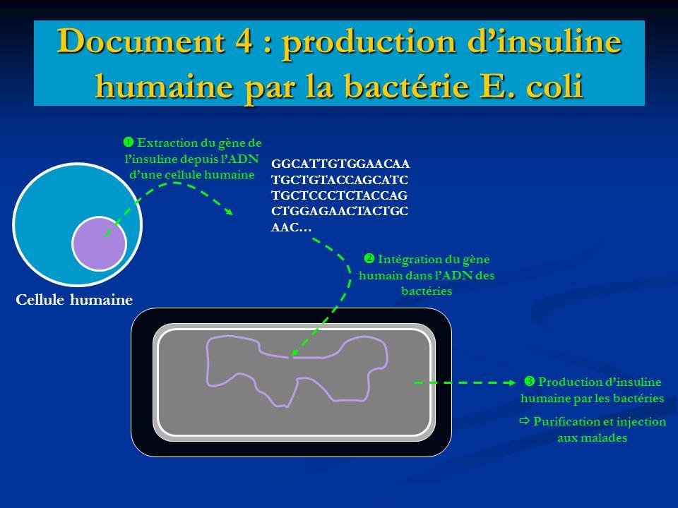 Document 4 : production dinsuline humaine par la bactérie E. coli Cellule humaine Extraction du gène de linsuline depuis lADN dune cellule humaine GGC