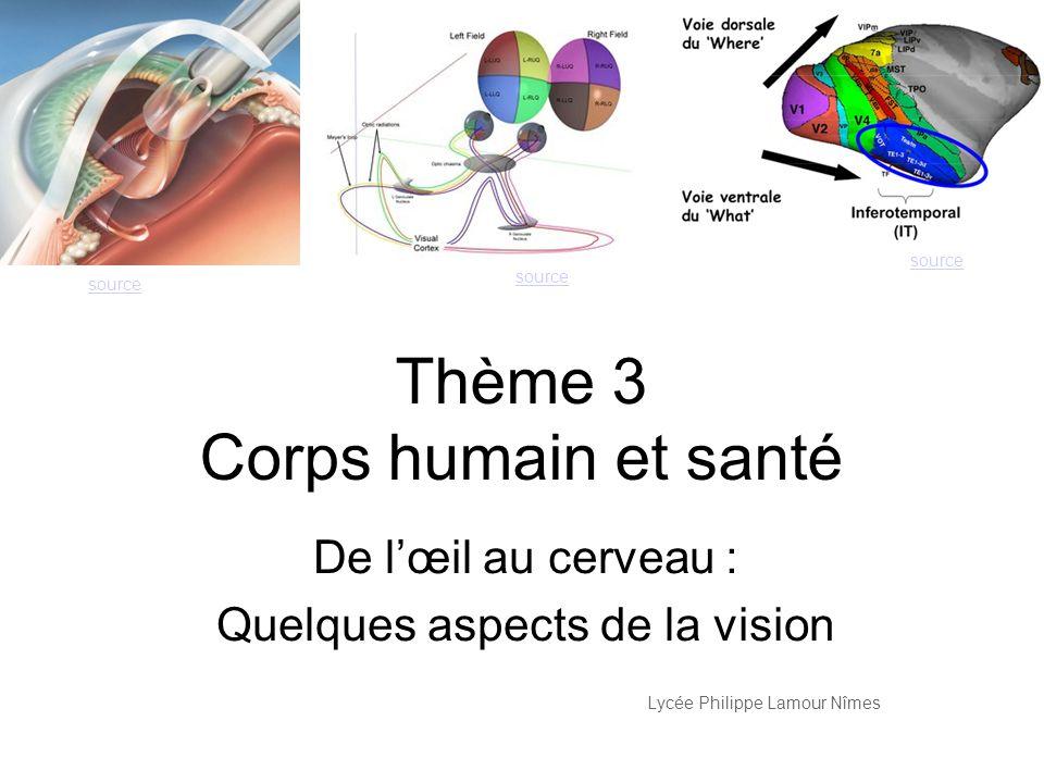 Thème 3 Corps humain et santé De lœil au cerveau : Quelques aspects de la vision Lycée Philippe Lamour Nîmes source