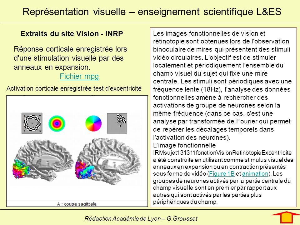 Représentation visuelle – enseignement scientifique L&ES Rédaction Académie de Lyon – G.Grousset Réponse corticale enregistrée lors d'une stimulation