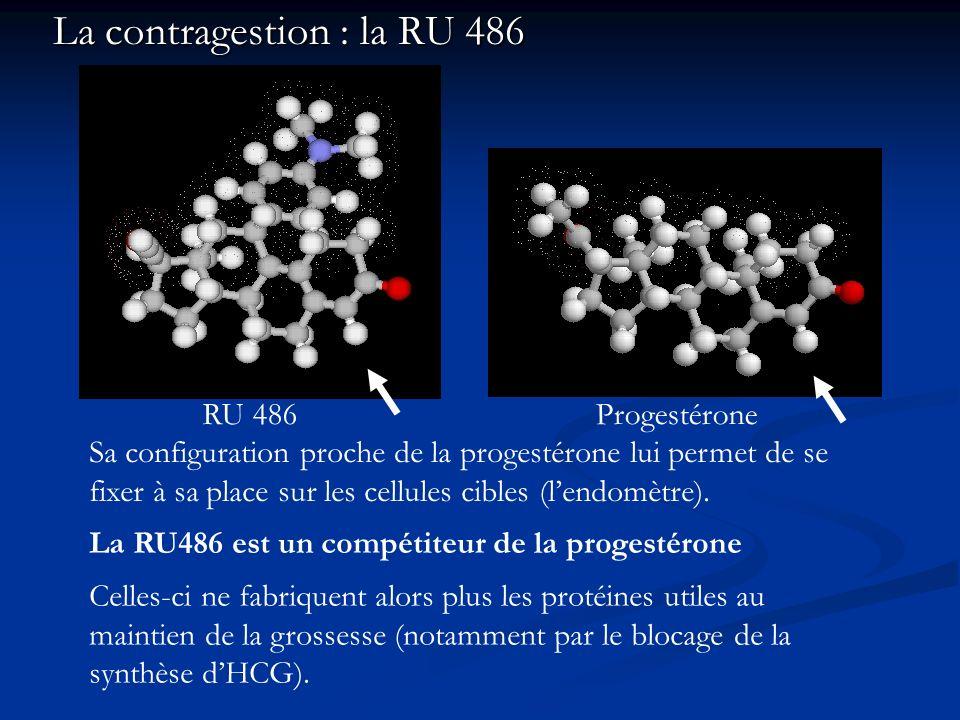 La contragestion : la RU 486 RU 486Progestérone La RU486 est un compétiteur de la progestérone Sa configuration proche de la progestérone lui permet d