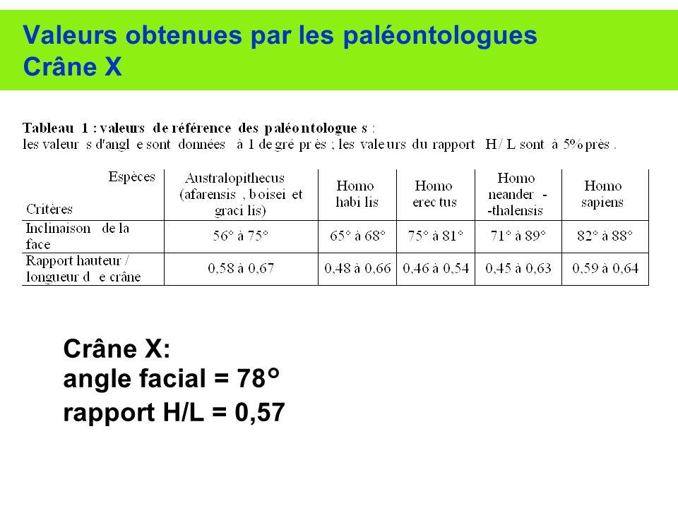 Valeurs obtenues par les paléontologues Crâne X Crâne X: angle facial = 78° rapport H/L = 0,57