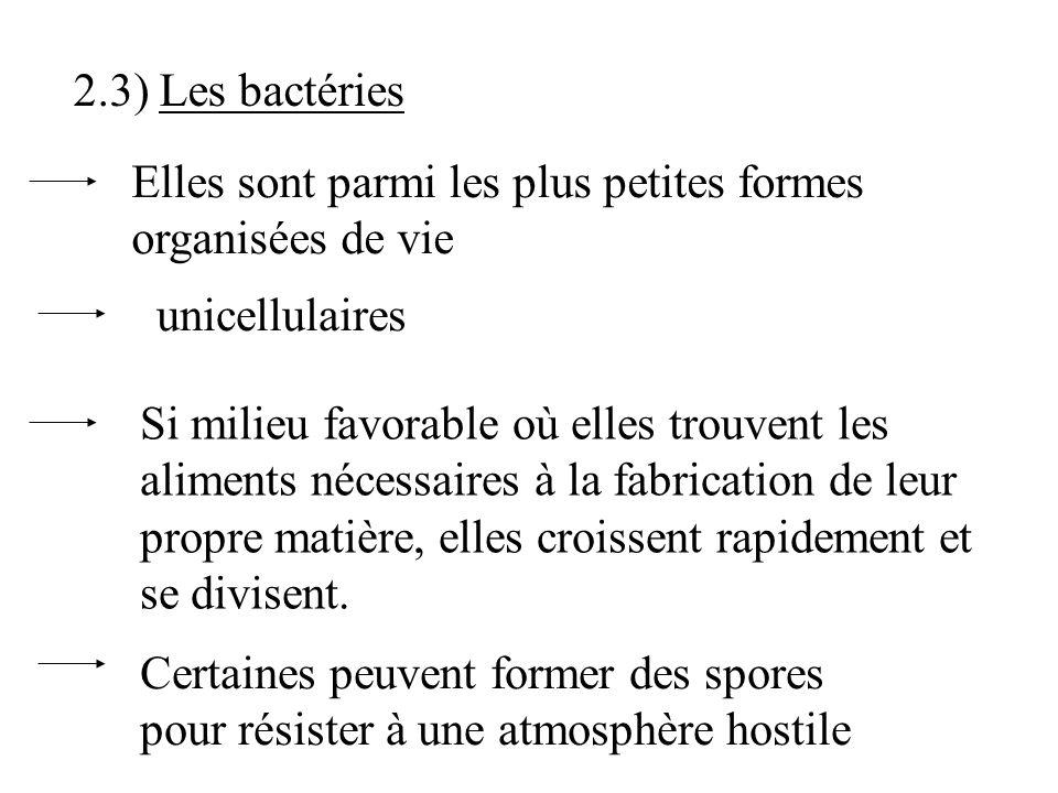 dautres sont pathogènes: Candida albicans mycosesmuguet