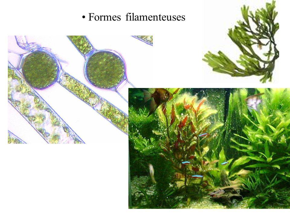 Formes unicellulaires microscopiques Leurs dimensions varient:
