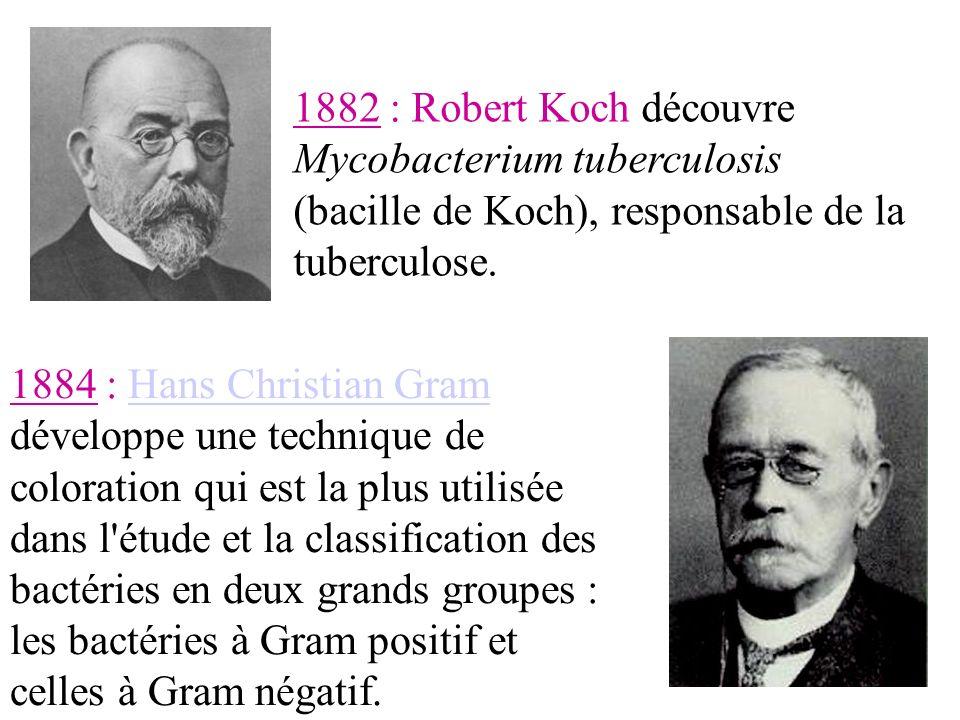 1884 : Hans Christian Gram développe une technique de coloration qui est la plus utilisée dans l étude et la classification des bactéries en deux grands groupes : les bactéries à Gram positif et celles à Gram négatif.Hans Christian Gram 1882 : Robert Koch découvre Mycobacterium tuberculosis (bacille de Koch), responsable de la tuberculose.