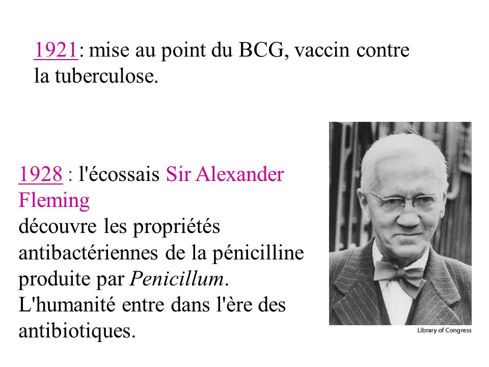 1928 : l écossais Sir Alexander Fleming découvre les propriétés antibactériennes de la pénicilline produite par Penicillum.