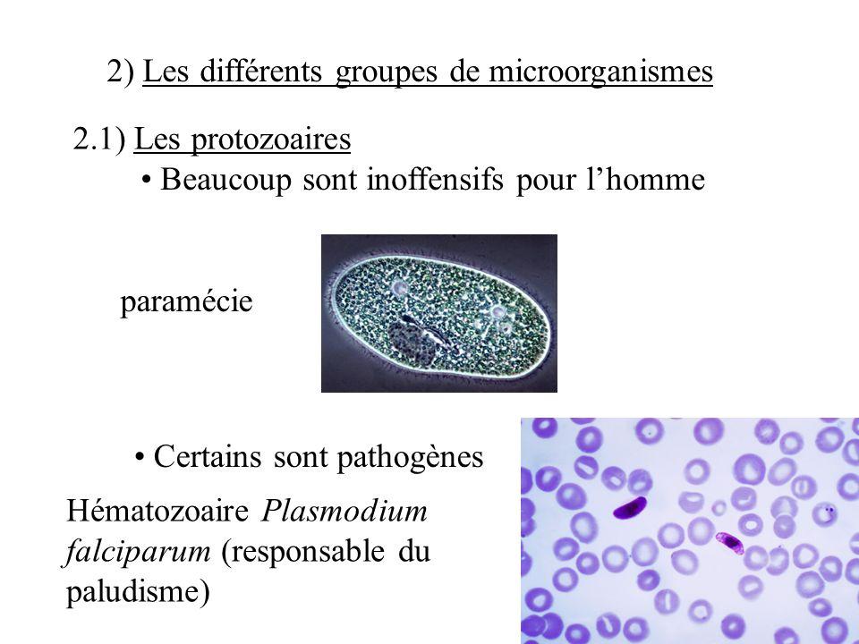 2) Les différents groupes de microorganismes 2.1) Les protozoaires Beaucoup sont inoffensifs pour lhomme paramécie Certains sont pathogènes Hématozoaire Plasmodium falciparum (responsable du paludisme)