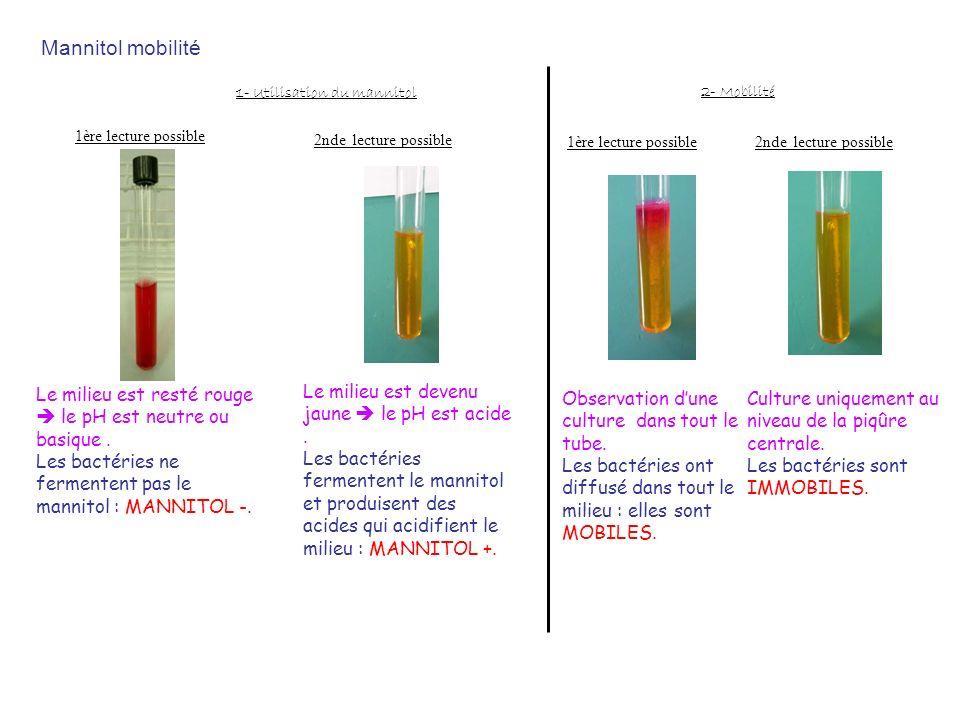Mannitol mobilité 1ère lecture possible Le milieu est resté rouge le pH est neutre ou basique. Les bactéries ne fermentent pas le mannitol : MANNITOL