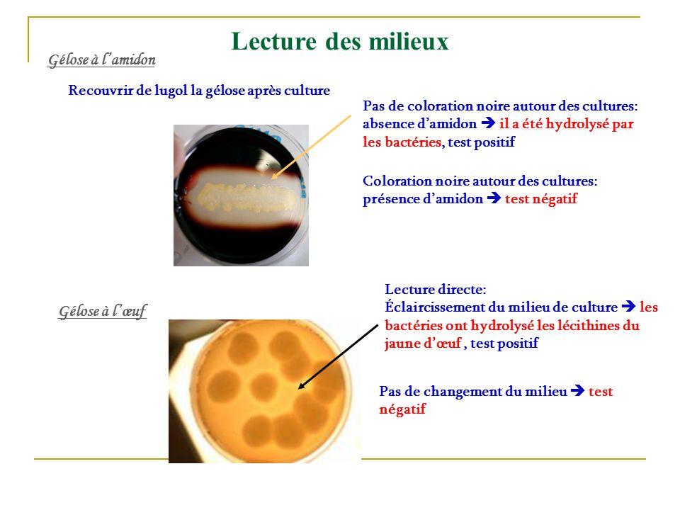 Recouvrir de lugol la gélose après culture Pas de coloration noire autour des cultures: absence damidon il a été hydrolysé par les bactéries, test pos