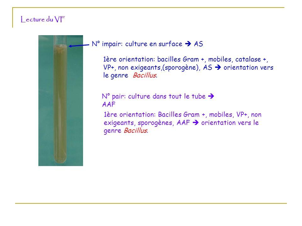 Lecture du VF N° impair: culture en surface AS N° pair: culture dans tout le tube AAF 1ère orientation: bacilles Gram +, mobiles, catalase +, VP+, non