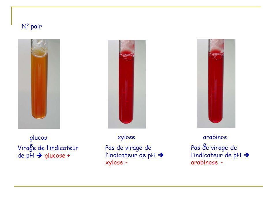 N° pair glucos e Virage de l indicateur de pH glucose + xylose Pas de virage de l indicateur de pH xylose - arabinos e Pas de virage de l indicateur d
