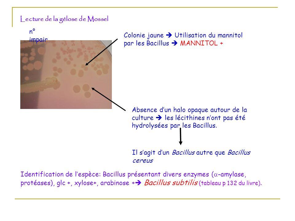 Lecture de la gélose de Mossel n° impair Colonie jaune Utilisation du mannitol par les Bacillus MANNITOL + Absence d un halo opaque autour de la cultu