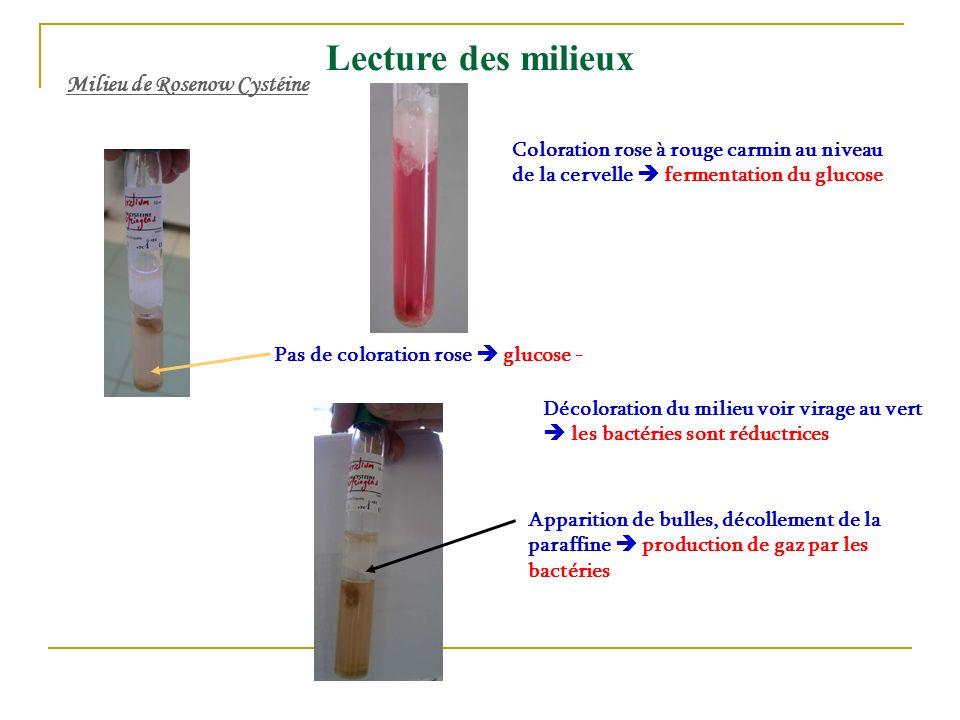 Coloration rose à rouge carmin au niveau de la cervelle fermentation du glucose Pas de coloration rose glucose - Milieu de Rosenow Cystéine Lecture de