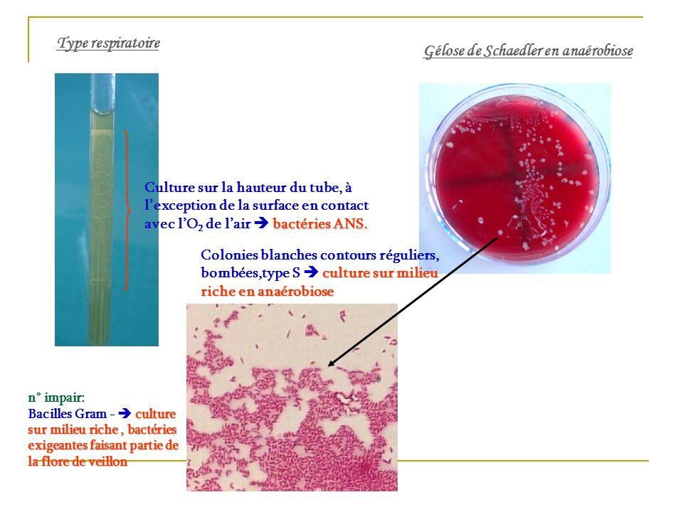 Gélose de Schaedler en anaérobiose Type respiratoire Culture sur la hauteur du tube, à lexception de la surface en contact avec lO 2 de lair b bb bact