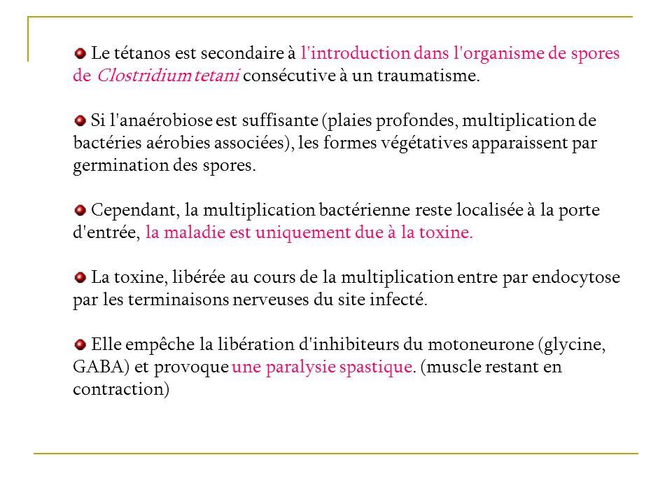 Le tétanos est secondaire à l'introduction dans l'organisme de spores de Clostridium tetani consécutive à un traumatisme. Si l'anaérobiose est suffisa