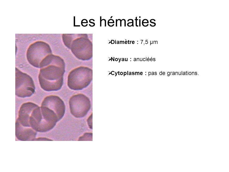 Les hématies Diamètre : 7,5 µm Noyau : anucléés Cytoplasme : pas de granulations.