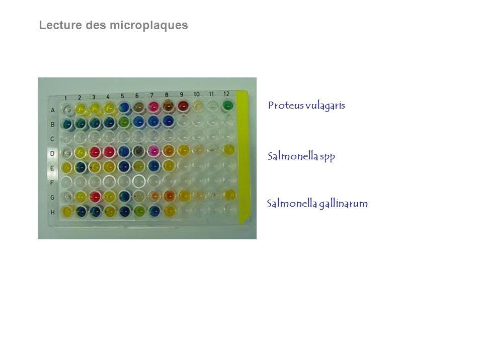 Lecture des microplaques Salmonella gallinarum Proteus vulagaris Salmonella spp