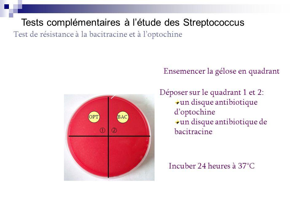 Lecture de la résistance à la bacitracine Culture autour du disque dantibiotique les bactéries sont résistantes à la bacitracine Zone d inhibition d au moins 12 mm autour du disque d antibiotique les bactéries sont sensibles à la bacitracine Remarque: un S SS Streptococcus sensible à la bacitracine et hémolytique suspicion de Streptococcus du groupe A (à confirmer avec un groupage)