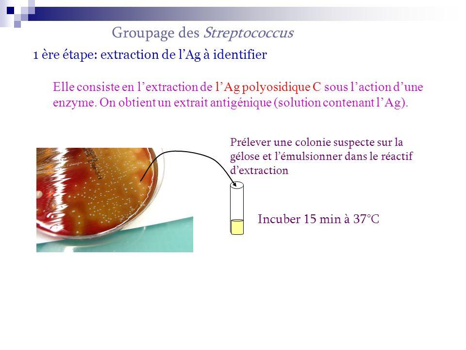 2nde étape: formation du complexe Ag-Ac 1 goutte de particule de latex sensibilisé anti A ou B … 1 goutte dextrait Réaction dagglutination Identification du Streptococcus par rapport au latex sensibilisé.