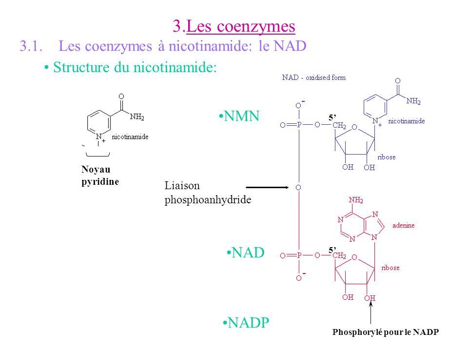 3.Les coenzymes Phosphorylé pour le NADP Liaison phosphoanhydride 5 5 Noyau pyridine 3.1. Les coenzymes à nicotinamide: le NAD Structure du nicotinami