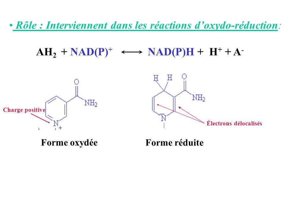 Rôle : Interviennent dans les réactions doxydo-réduction: AH 2 + NAD(P) + NAD(P)H + H + + A - _ Forme oxydée Forme réduite Charge positive Électrons d