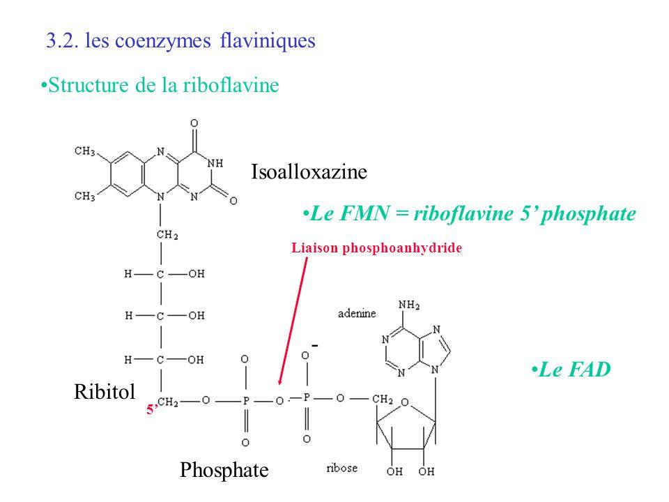 3.2. les coenzymes flaviniques Le FMN = riboflavine 5 phosphate Isoalloxazine Ribitol Phosphate 5 Le FAD Liaison phosphoanhydride Structure de la ribo