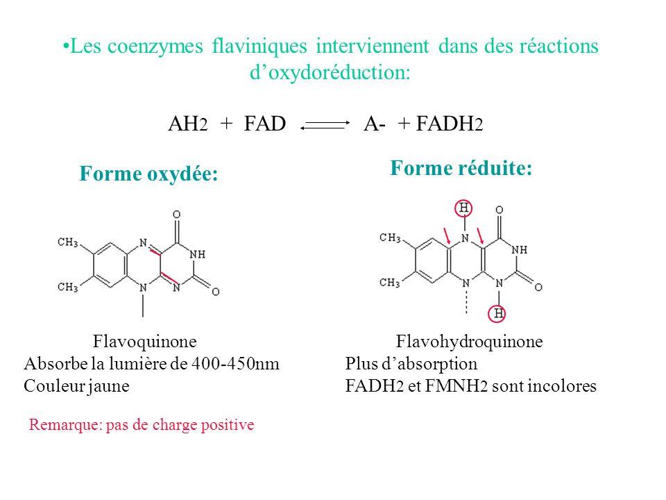 Les coenzymes flaviniques interviennent dans des réactions doxydoréduction: Forme oxydée: Flavoquinone Absorbe la lumière de 400-450nm Couleur jaune F