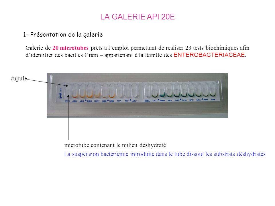 LA GALERIE API 20E 1- Présentation de la galerie Galerie de 20 microtubes prêts à lemploi permettant de réaliser 23 tests biochimiques afin didentifie