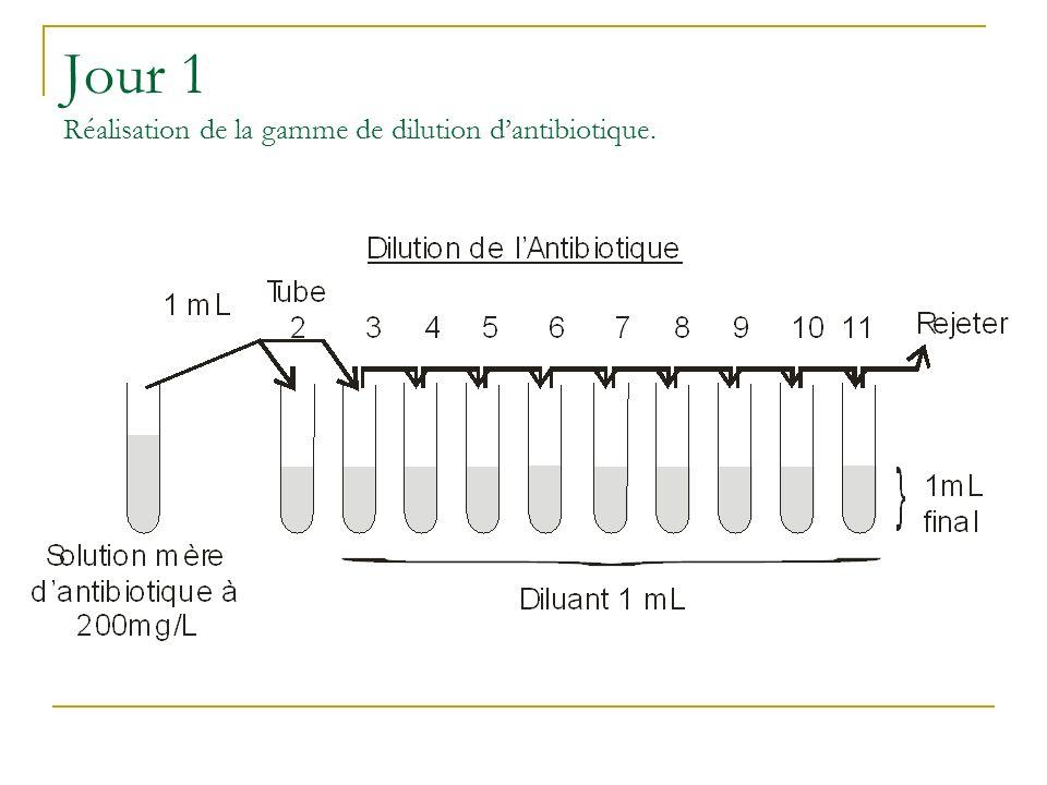 Jour 1 Réalisation de la gamme de dilution dantibiotique.