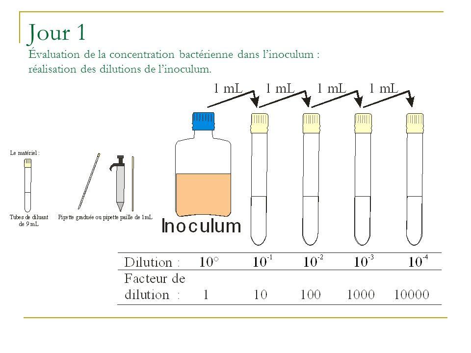 Jour 1 Évaluation de la concentration bactérienne dans linoculum : réalisation des dilutions de linoculum.