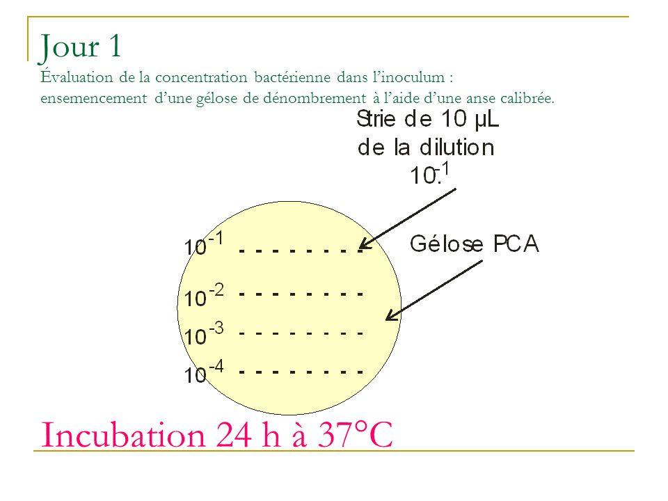 Jour 1 Évaluation de la concentration bactérienne dans linoculum : ensemencement dune gélose de dénombrement à laide dune anse calibrée.