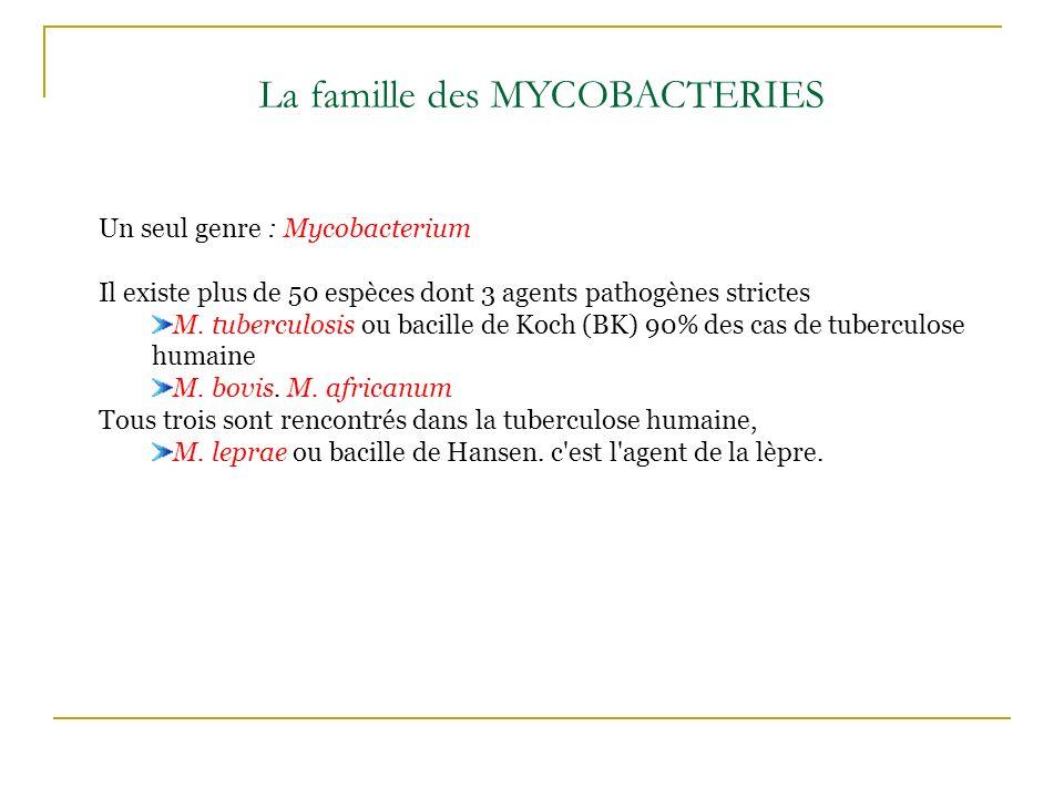 La famille des MYCOBACTERIES Un seul genre : Mycobacterium Il existe plus de 50 espèces dont 3 agents pathogènes strictes M. tuberculosis ou bacille d