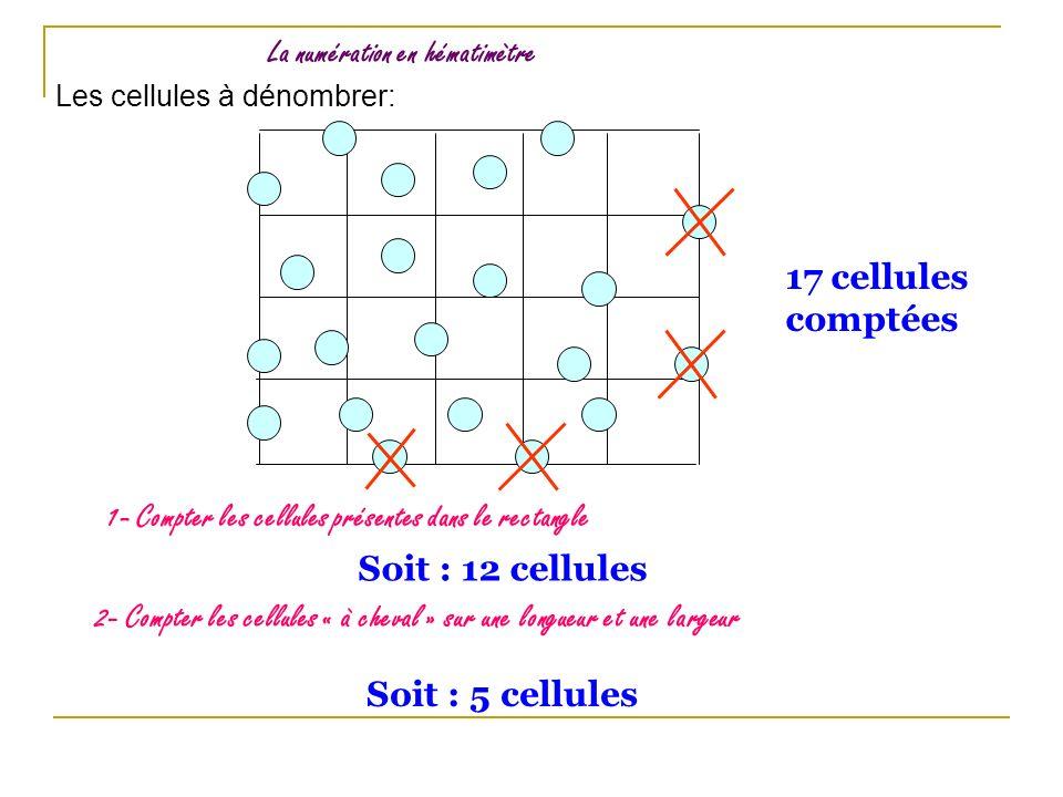 La numération en hématimètre 1- Compter les cellules présentes dans le rectangle Soit : 12 cellules 2- Compter les cellules « à cheval » sur une longu