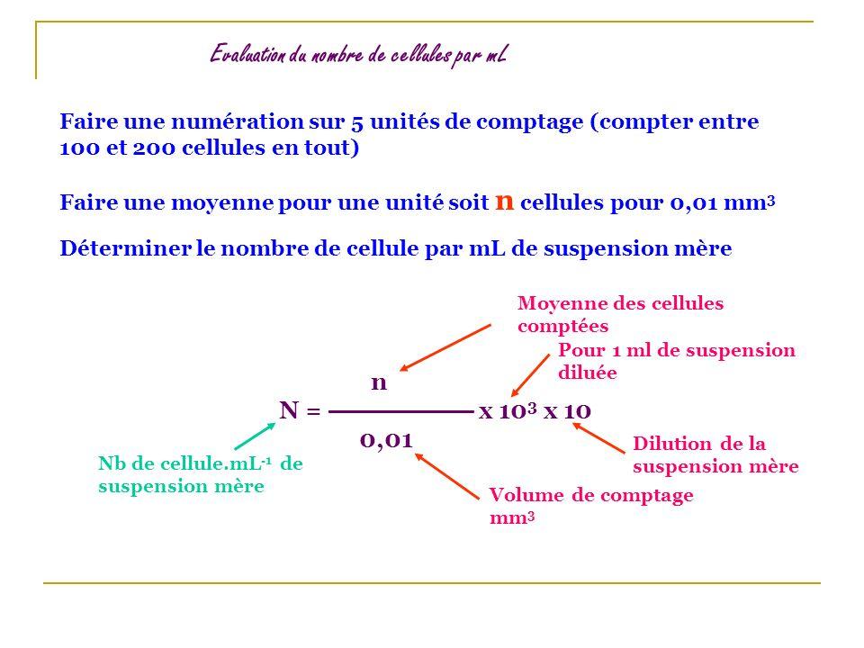Evaluation du nombre de cellules par mL Faire une numération sur 5 unités de comptage (compter entre 100 et 200 cellules en tout) Faire une moyenne po