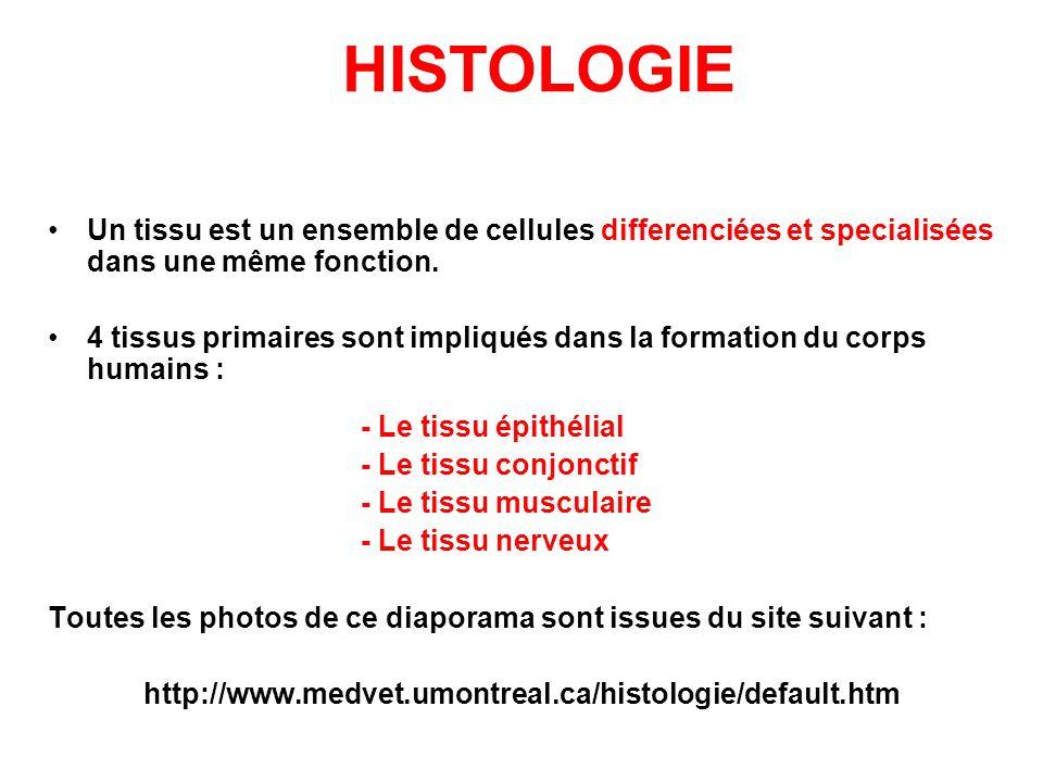HISTOLOGIE Un tissu est un ensemble de cellules differenciées et specialisées dans une même fonction. 4 tissus primaires sont impliqués dans la format