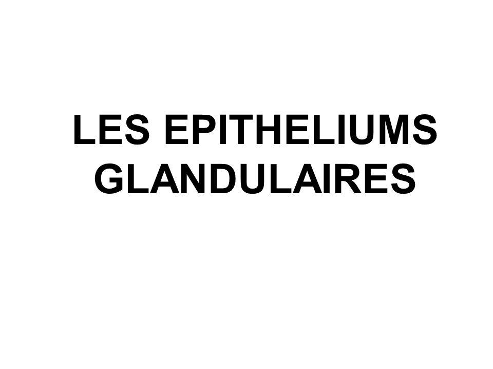 LES EPITHELIUMS GLANDULAIRES