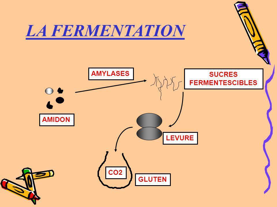 LA FERMENTATION AMIDON SUCRES FERMENTESCIBLES LEVURE GLUTEN AMYLASES CO2