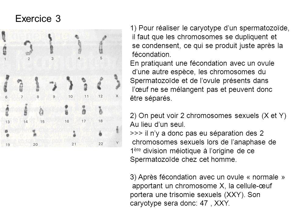 Exercice 3 1) Pour réaliser le caryotype dun spermatozoïde, il faut que les chromosomes se dupliquent et se condensent, ce qui se produit juste après