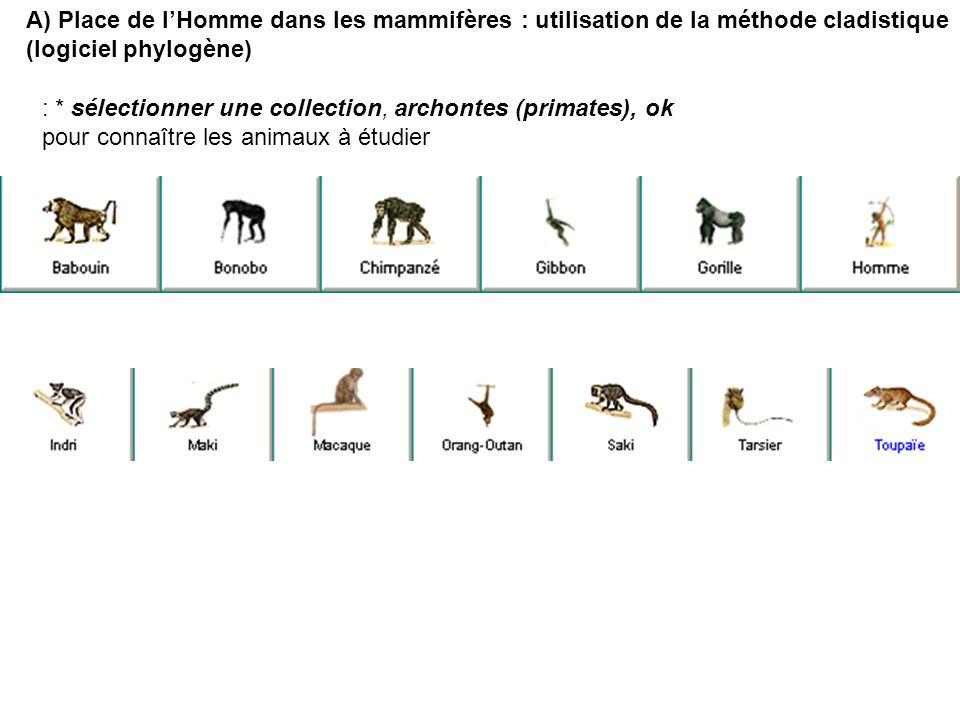 : * sélectionner une collection, archontes (primates), ok pour connaître les animaux à étudier A) Place de lHomme dans les mammifères : utilisation de
