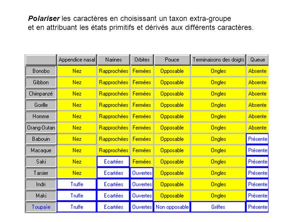 Polariser les caractères en choisissant un taxon extra-groupe et en attribuant les états primitifs et dérivés aux différents caractères.