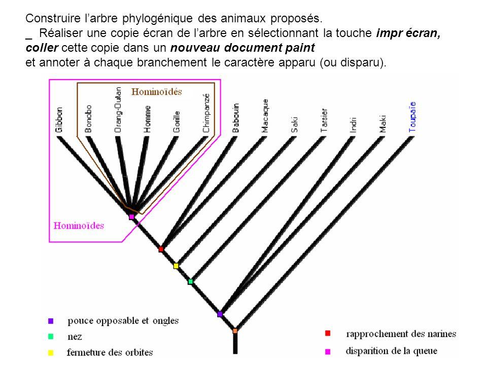 Construire larbre phylogénique des animaux proposés. _ Réaliser une copie écran de larbre en sélectionnant la touche impr écran, coller cette copie da