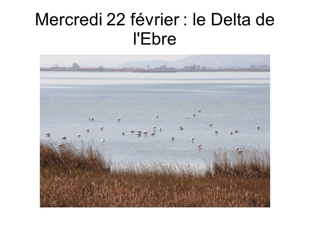 Mercredi 22 février : le Delta de l Ebre
