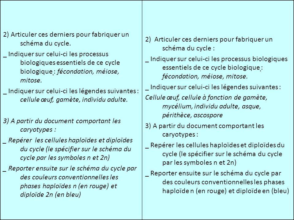 2) Articuler ces derniers pour fabriquer un schéma du cycle. _ Indiquer sur celui-ci les processus biologiques essentiels de ce cycle biologique : féc