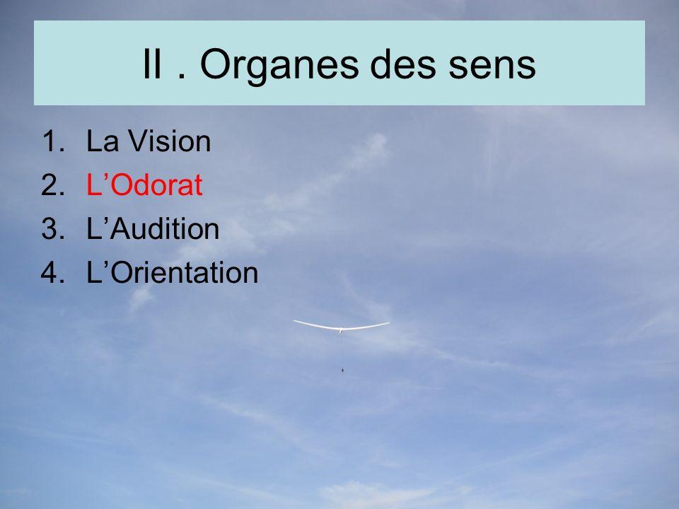 II. Organes des sens 1.La Vision 2.LOdorat 3.LAudition 4.LOrientation