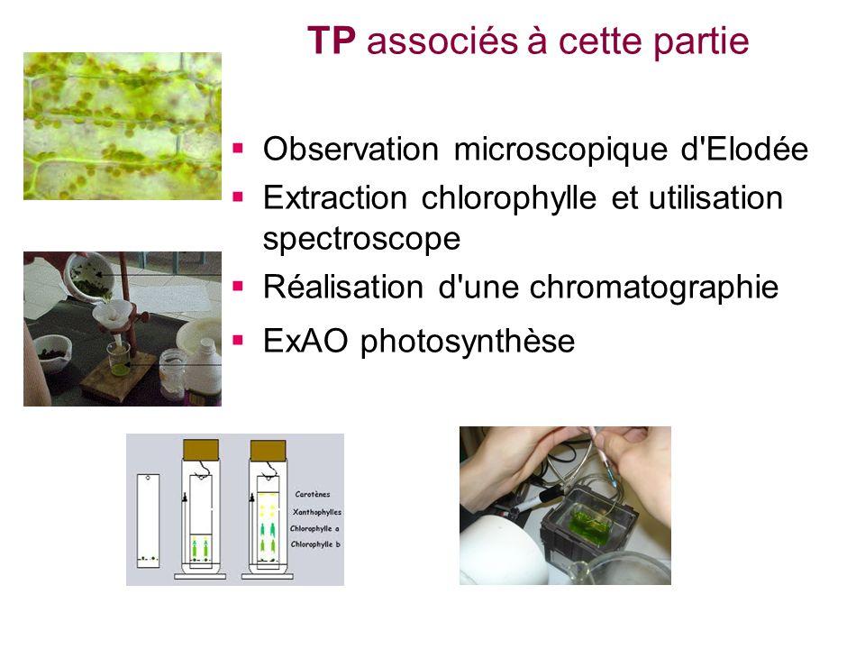 Observation microscopique d'Elodée Extraction chlorophylle et utilisation spectroscope Réalisation d'une chromatographie ExAO photosynthèse TP associé